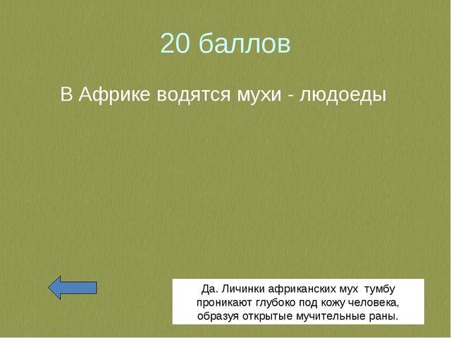 20 баллов В Африке водятся мухи - людоеды Да. Личинки африканских мух тумбу п...