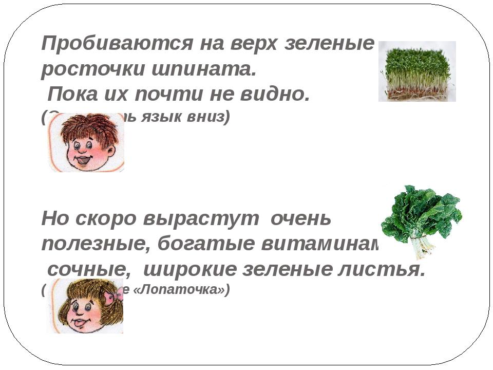 Пробиваются на верх зеленые росточки шпината. Пока их почти не видно. (Опусти...