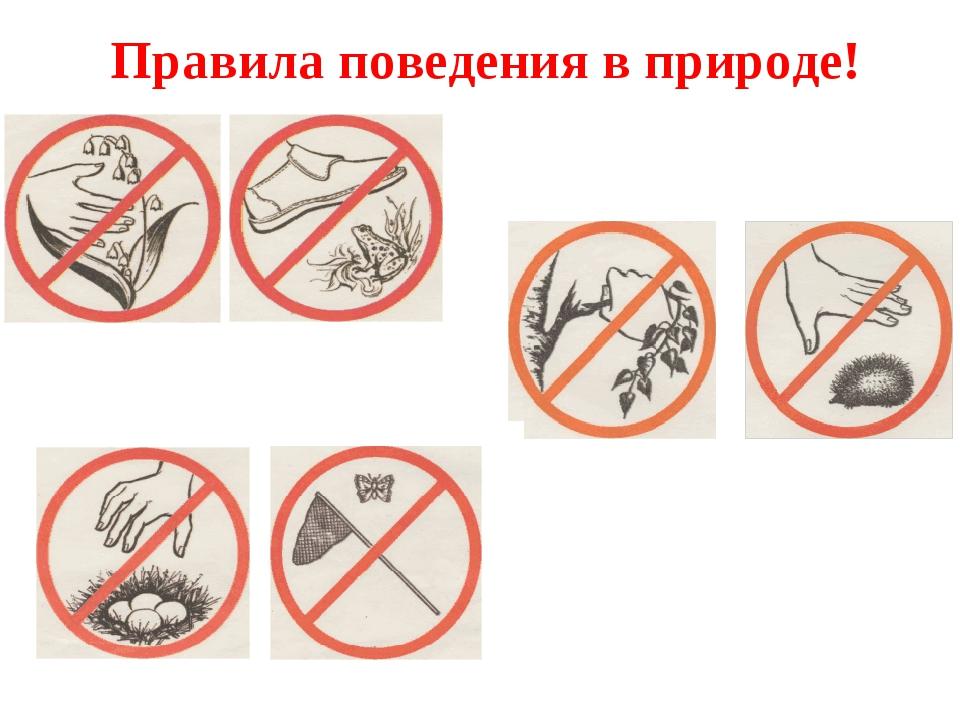 Правила поведения в природе!