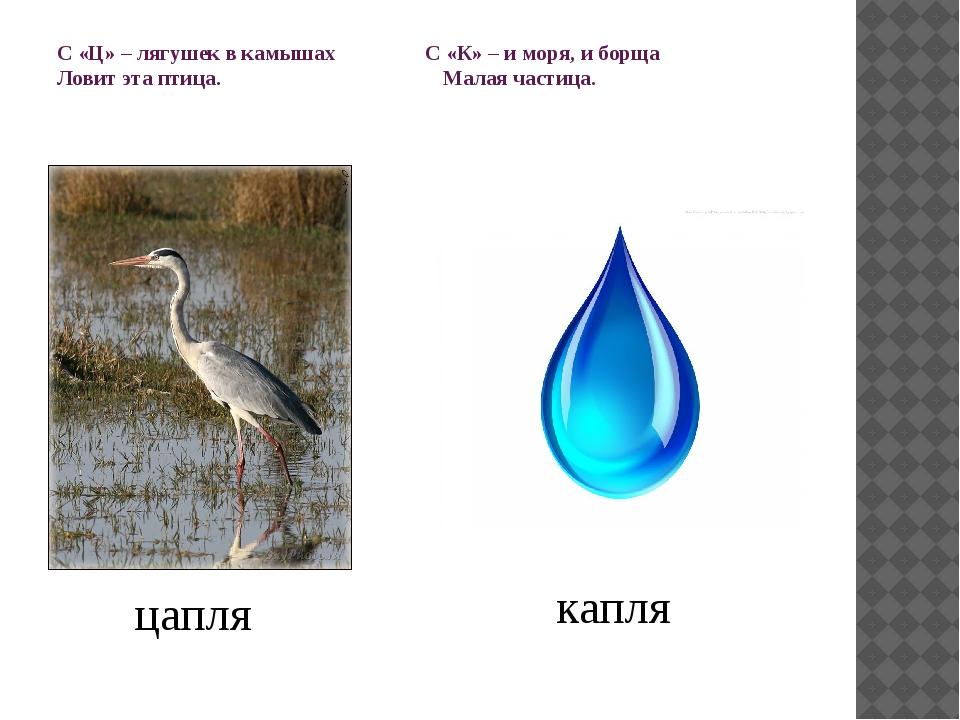 С «Ц» – лягушек в камышах С «К» – и моря, и борща Ловит эта птица. Малая част...