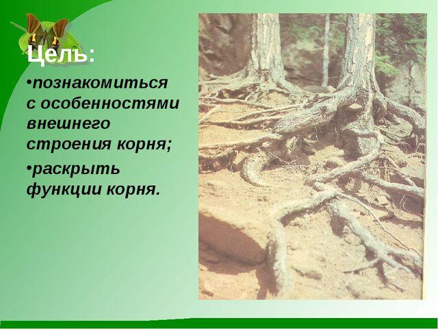 Цель: познакомиться с особенностями внешнего строения корня; раскрыть функции...