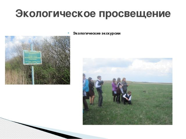 Экологические экскурсии Экологическое просвещение