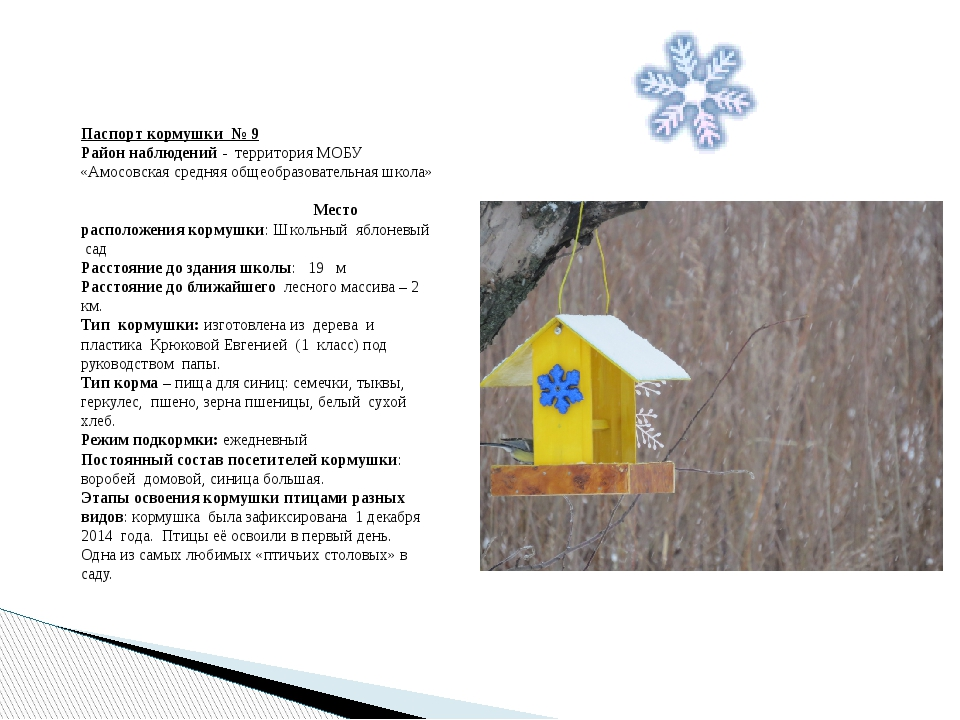 Паспорт кормушки № 9 Район наблюдений - территория МОБУ «Амосовская средняя о...