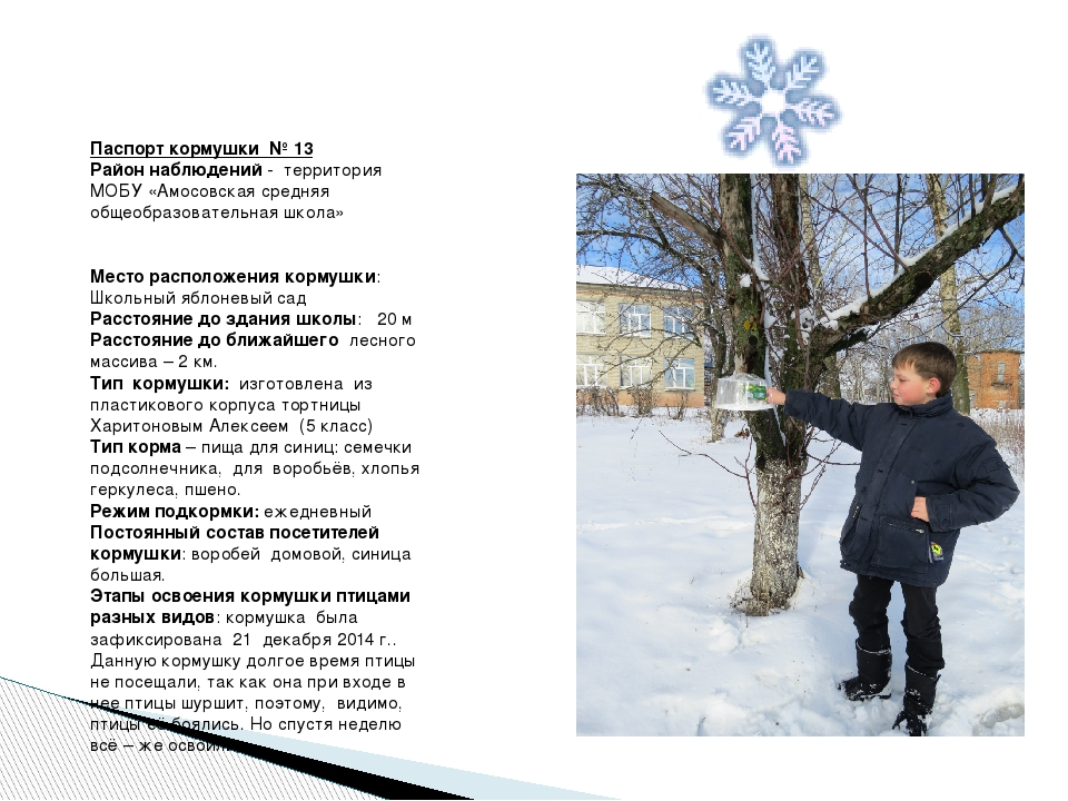 Паспорт кормушки № 13 Район наблюдений - территория МОБУ «Амосовская средняя...
