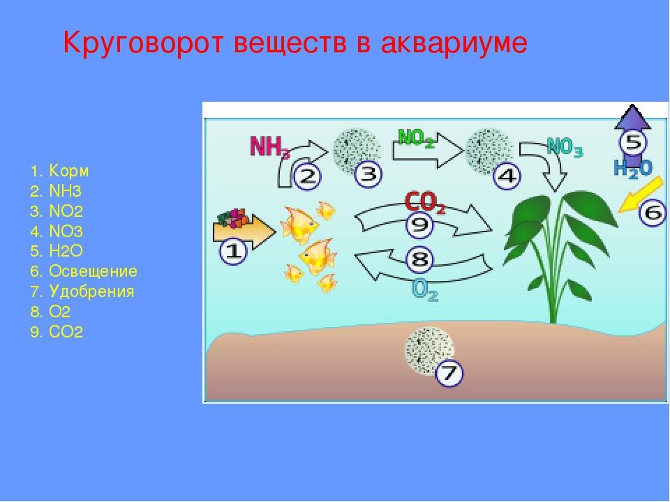 Круговорот веществ в аквариуме 1. Корм 2. NH3 3. NO2 4. NO3 5. H2O 6. Освеще...