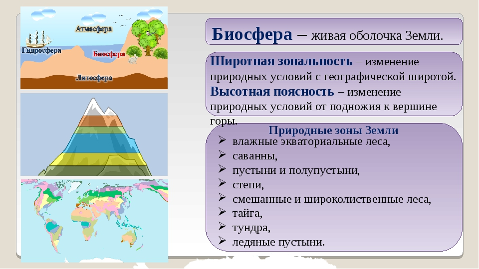 Биосфера – живая оболочка Земли. Природные зоны Земли влажные экваториальные...