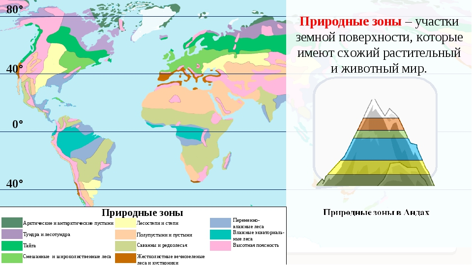 80° Природные зоны – участки земной поверхности, которые имеют схожий растите...