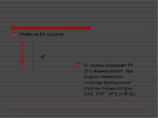 Имеется 64 кодона: 61 кодон кодирует 20 (21) аминокислот, три кодона являются