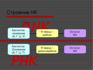 Строение НК Углевод – дезоксирибоза Азотистое Основание (А, Г, Ц, Т) Остаток