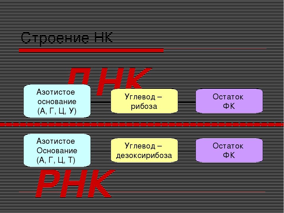 Строение НК Углевод – дезоксирибоза Азотистое Основание (А, Г, Ц, Т) Остаток...