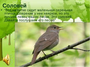 """Соловей """"Вот на ветке сидит маленькая серенькая птичка. Оперение у нее неярко"""