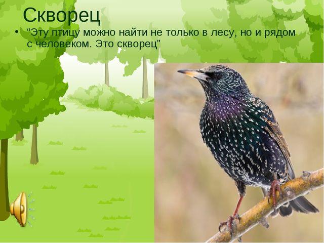 """Скворец """"Эту птицу можно найти не только в лесу, но и рядом с человеком. Это..."""