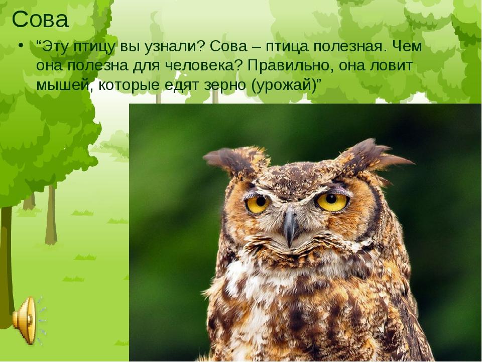 """Сова """"Эту птицу вы узнали? Сова – птица полезная. Чем она полезна для человек..."""