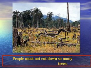 People must not cut down so many trees.