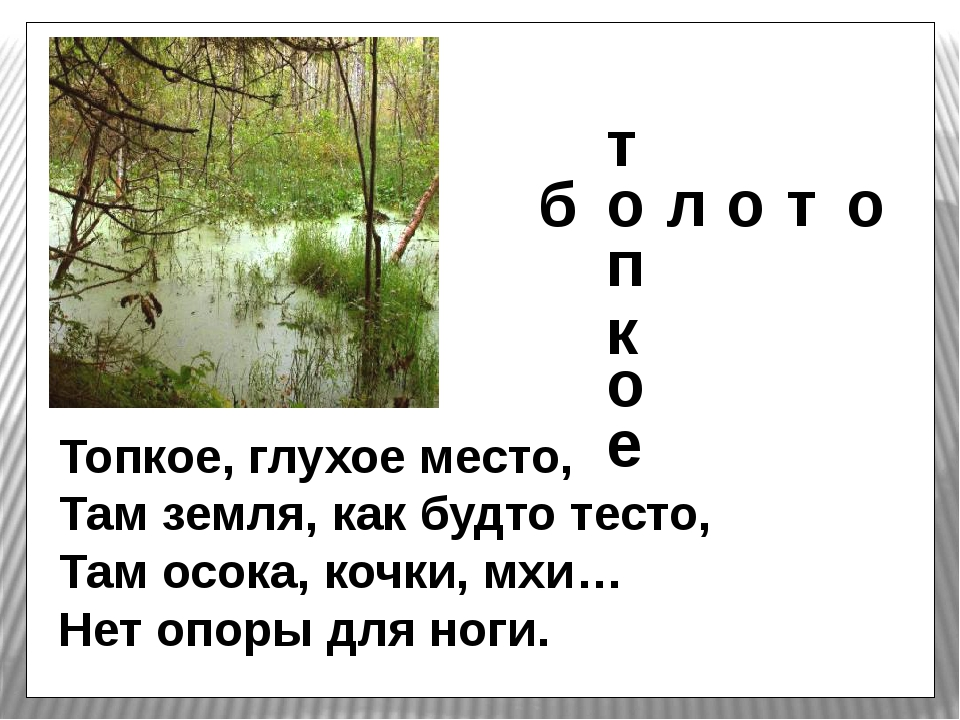 Топкое, глухое место, Там земля, как будто тесто, Там осока, кочки, мхи… Нет...