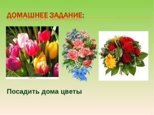 Посадить дома цветы