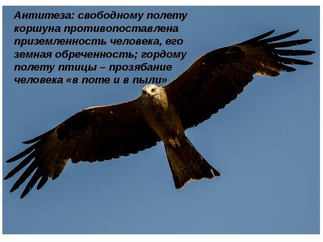 Антитеза: свободному полету коршуна противопоставлена приземленность человек...