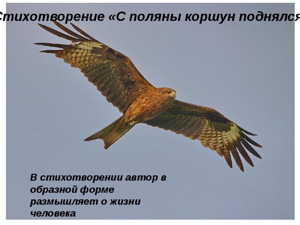 Стихотворение «С поляны коршун поднялся» В стихотворении автор в образной фо...