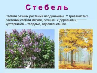 С т е б е л ь Стебли разных растений неодинаковы. У травянистых растений сте