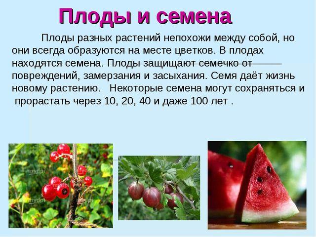 Плоды и семена Плоды разных растений непохожи между собой, но они всегда обр...