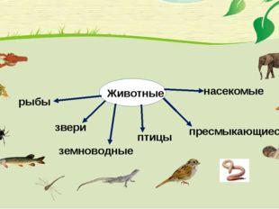 Животные насекомые пресмыкающиеся рыбы птицы звери земноводные