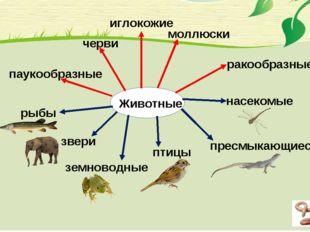 Животные насекомые пресмыкающиеся рыбы птицы звери земноводные черви иглокожи