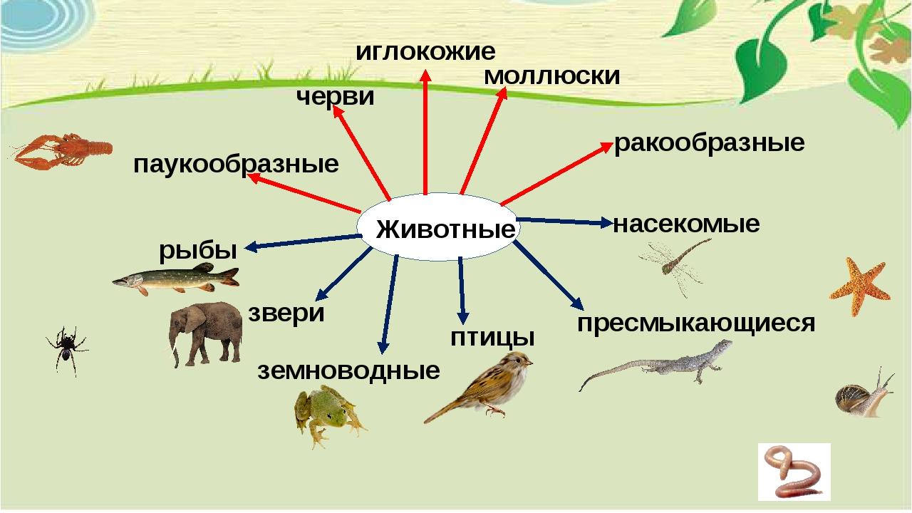 Животные насекомые пресмыкающиеся рыбы птицы звери земноводные черви иглокожи...