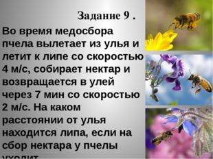 Задание 9 . Во время медосбора пчела вылетает из улья и летит к липе со скоро