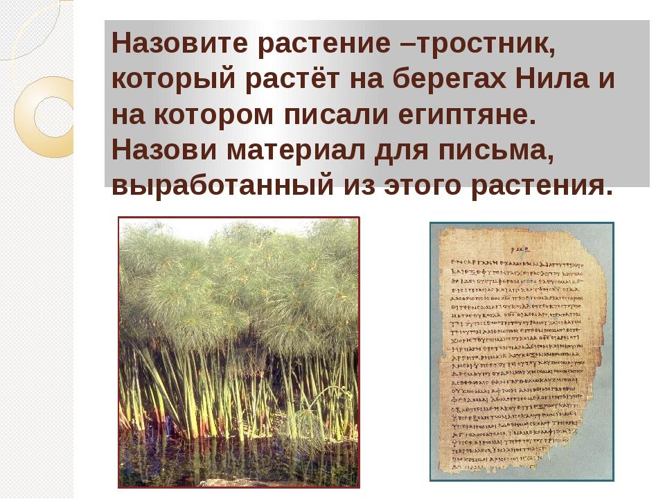 Назовите растение –тростник, который растёт на берегах Нила и на котором писа...
