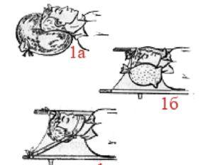 Способы иммобилизации 1 — головы: (а) - с помощью слабо надутого резинового к