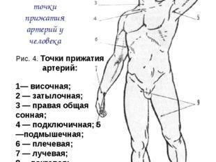 Рис. 4. Точки прижатия артерий: 1— височная; 2 — затылочная; 3 — правая общая
