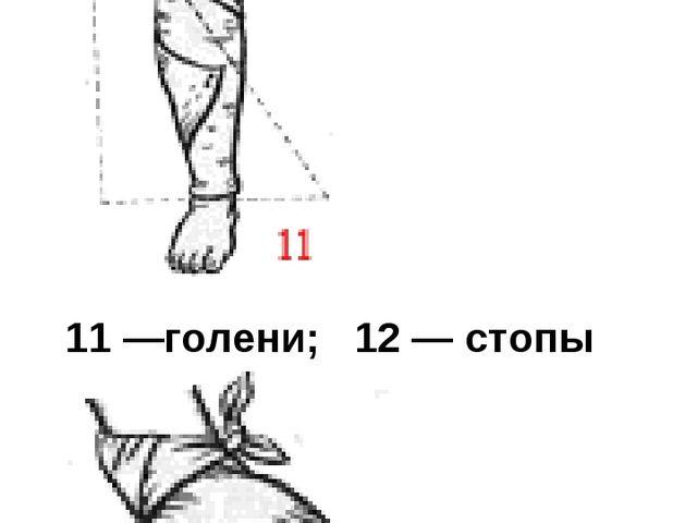 11 —голени; 12 — стопы