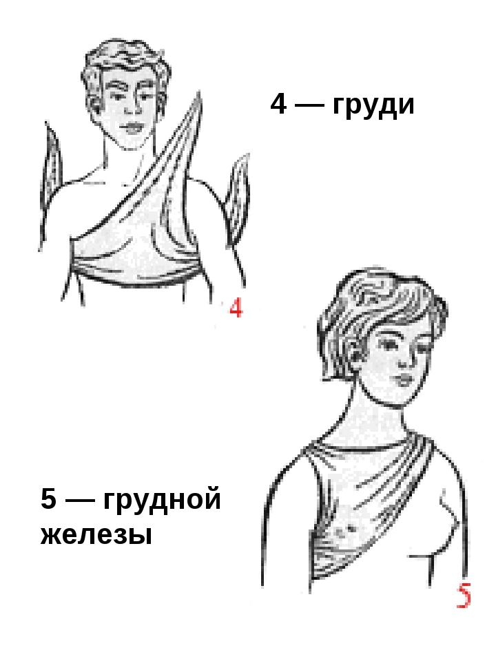 4 — груди 5 — грудной железы