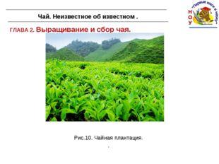 ГЛАВА 2. Выращивание и сбор чая. Чай. Неизвестное об известном . Рис.10. Чайн