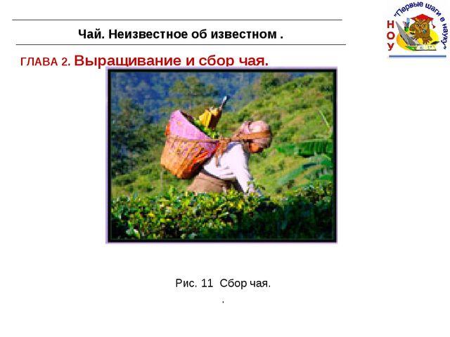 ГЛАВА 2. Выращивание и сбор чая. Чай. Неизвестное об известном . Рис. 11 Сбор...