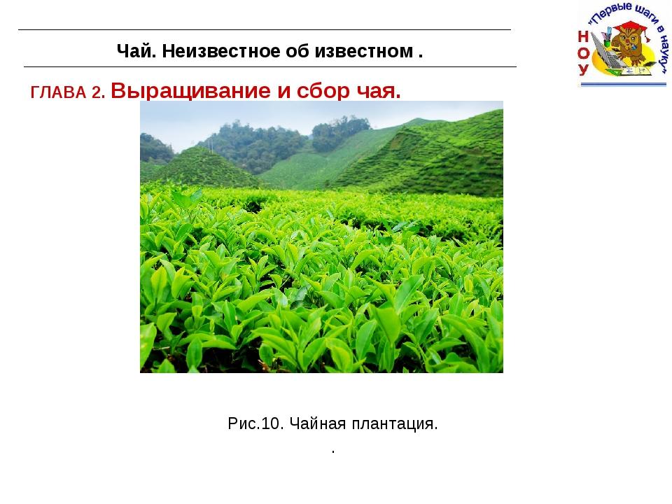 ГЛАВА 2. Выращивание и сбор чая. Чай. Неизвестное об известном . Рис.10. Чайн...
