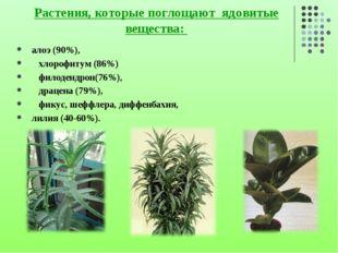 Растения, которые поглощают ядовитые вещества: алоэ (90%), хлорофитум (86%) ф