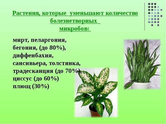 Растения, которые уменьшают количество болезнетворных микробов: мирт, пеларго...