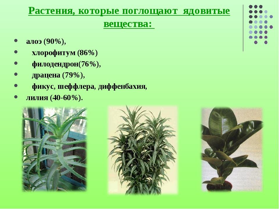 Растения, которые поглощают ядовитые вещества: алоэ (90%), хлорофитум (86%) ф...
