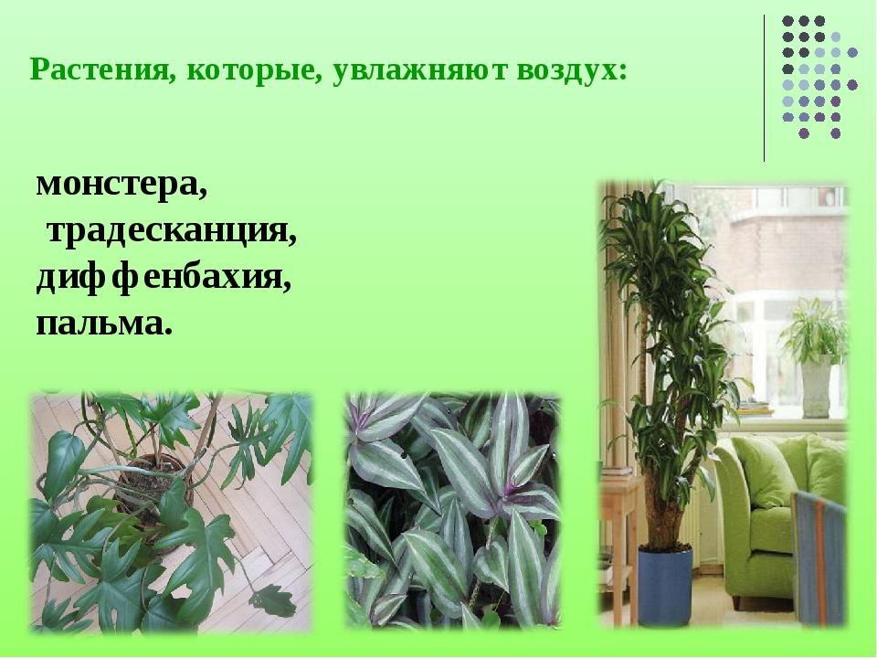 Растения, которые, увлажняют воздух: монстера, традесканция, диффенбахия, пал...