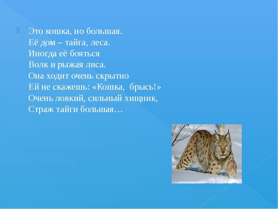 Это кошка, но большая. Её дом – тайга, леса. Иногда её бояться Волк и рыжая л...