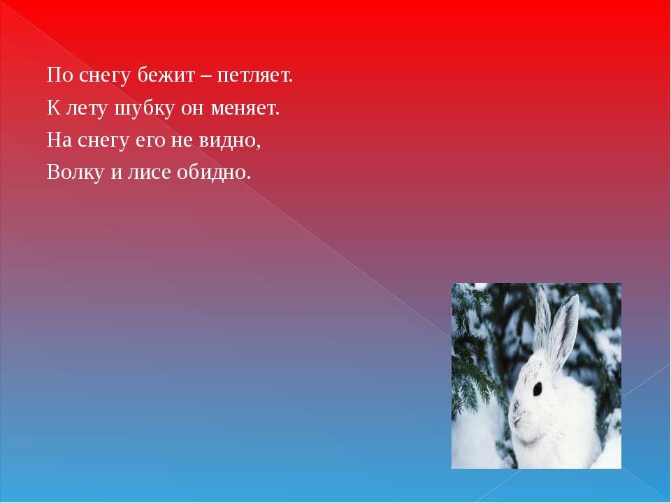 По снегу бежит – петляет. К лету шубку он меняет. На снегу его не видно, Волк...