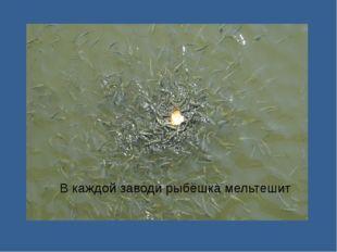 В каждой заводи рыбёшка мельтешит