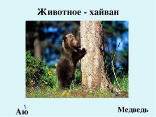 Животное - хайван Аю Медведь