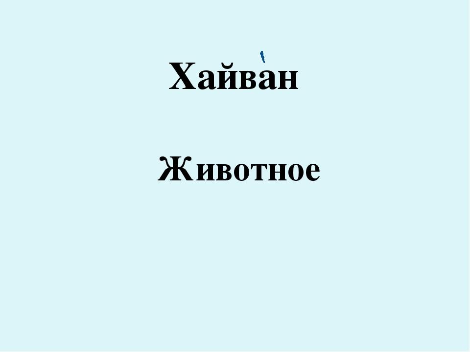 Хайван Животное