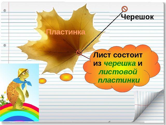 Лист состоит из черешка и листовой пластинки Черешок Пластинка
