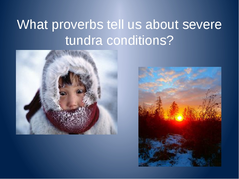 What proverbs tell us about severe tundra conditions?