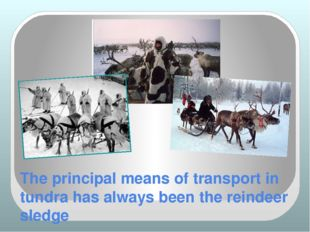 The principal means of transport in tundra has always been the reindeer sledge
