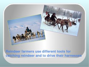 Reindeer farmers use different tools for catching reindeer and to drive their