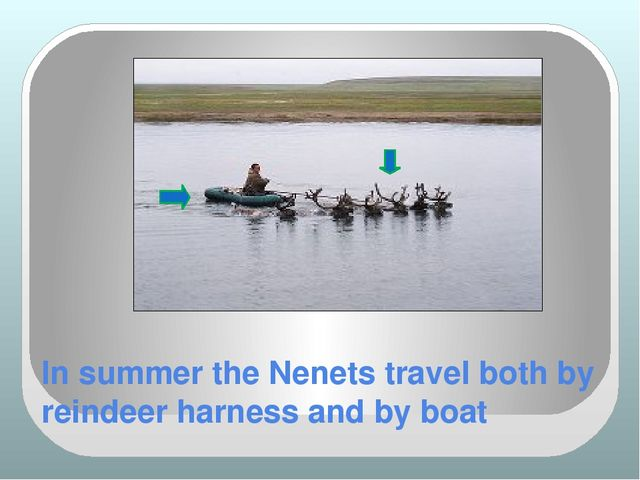 In summer the Nenets travel both by reindeer harness and by boat